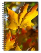 Brilliant Autumn Light And Color Spiral Notebook