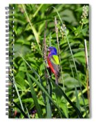 Brilliant Bunting Spiral Notebook