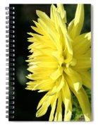 Brilliant Mornings Spiral Notebook