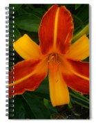 Brilliant Orange Lily Spiral Notebook