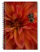 Brilliant Red Dahlia Spiral Notebook