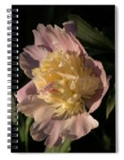 Brilliant Spring Sunshine - A Showy Pink Peony From My Garden Spiral Notebook