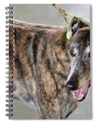Brindle Greyhound Dog Usa Spiral Notebook