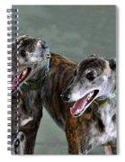 Brindle Greyhound Dogs Usa Spiral Notebook