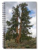 Brisslecone Pine Tree Spiral Notebook