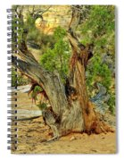 Bristlecone 1 Spiral Notebook