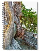Bristlecone Pine On Ramparts Trail In Cedar Breaks National Monument-utah  Spiral Notebook