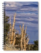 Bristlecone Warriors Spiral Notebook