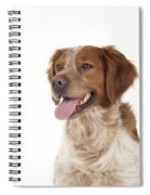 Brittany Dog, Close-up Of Head Spiral Notebook