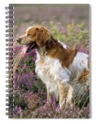 Brittany Dog, Standing In Heather, Side Spiral Notebook