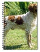 Brittany Dog, Standing Side Spiral Notebook