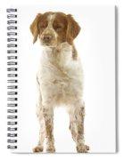 Brittany Spaniel Spiral Notebook