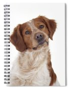 Brittany Spaniel Or Epagneul Breton Spiral Notebook