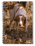 Brittany Spaniel Pixel's Pointed Woodcock Spiral Notebook