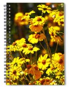 Brittle Bush In Bloom  Spiral Notebook