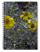 Brittlebush Flowers Spiral Notebook