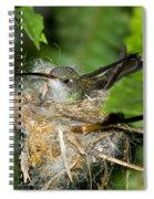Broad-billed Hummingbird In Nest Spiral Notebook