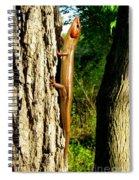 Broad Headed Skink Spiral Notebook