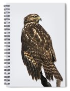 Broad Tailed Hawk Spiral Notebook