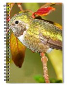 Broad Tailed Hummingbird Spiral Notebook