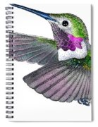 Broad-tailed Hummingbird Spiral Notebook