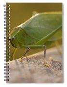Broad-winged Katydid Spiral Notebook