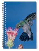 Broadbill Hummingbird Feeding At Flower Spiral Notebook