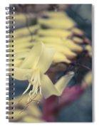 Bromeliaceae - Alcantarea Geniculata Spiral Notebook
