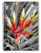 Bromeliad 1 Spiral Notebook