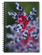 Bromeliad - Aechmia Dichlamydea - Guzmania Lingulata Spiral Notebook