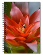 Bromeliad I Spiral Notebook