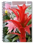 Bromeliad Red Pink Brick Spiral Notebook