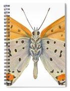 Bronze Copper Butterfly Spiral Notebook