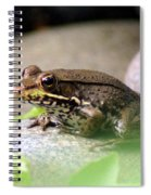 Bronze Frog Spiral Notebook
