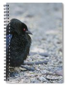 Bronzed Cowbird Display Spiral Notebook