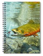 Brook Trout And Artificial Fly Spiral Notebook