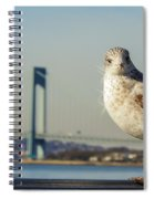 Brooklyn Seagull Spiral Notebook