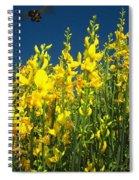 Broom And Carpenter Bee Spiral Notebook