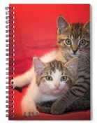 Brothers Kittens Spiral Notebook