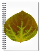 Brown And Green Aspen Leaf 4 Spiral Notebook