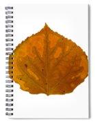 Brown And Orange Aspen Leaf 1 Spiral Notebook