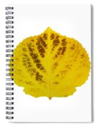 Brown And Yellow Aspen Leaf 3 Spiral Notebook