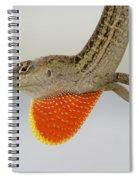 Brown Anole II Spiral Notebook