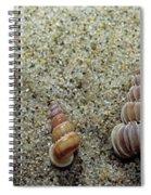 Brown-banded Wentletrap Spiral Notebook