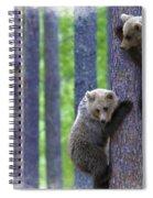 Brown Bear Climbing Lesson Spiral Notebook