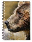 Brown Bear Golden Morning Spiral Notebook