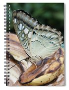 Brown Clipper Butterfly #3 Spiral Notebook
