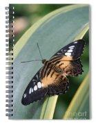 Brown Clipper Butterfly #4 Spiral Notebook