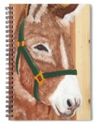 Brown Donkey On Cedar Spiral Notebook