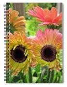 Brown Eyed Gerbera Daisies Spiral Notebook
